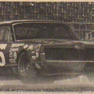 Cougar in Citrus 250