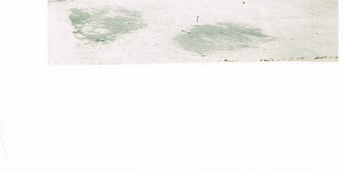 DALE BLACKWELDER