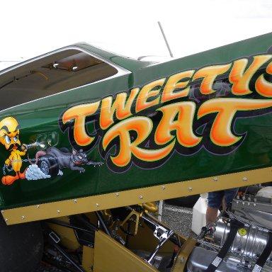 Tweety's Rat