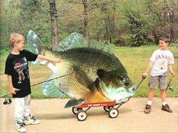 fishing song